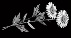 risunok-na-pamiatnik-zvety_15