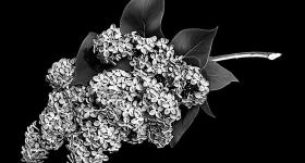 risunok-na-pamiatnik-zvety_17
