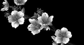 risunok-na-pamiatnik-zvety_20