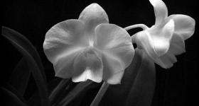 risunok-na-pamiatnik-zvety_25
