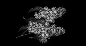 risunok-na-pamiatnik-zvety_5